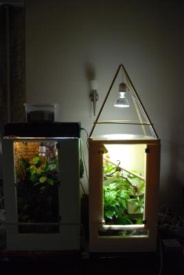 streifentaggecko phelsuma lineata. Black Bedroom Furniture Sets. Home Design Ideas